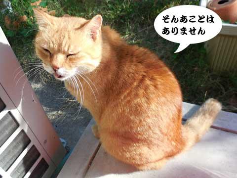 15_10_19_3.jpg