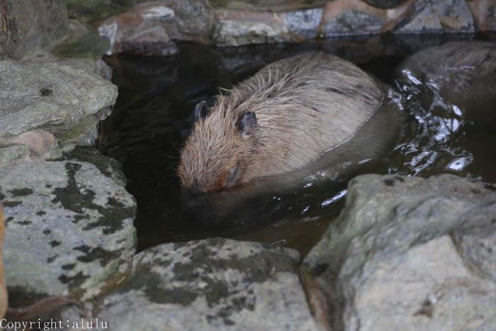 長崎バイオパーク 動物写真 温泉