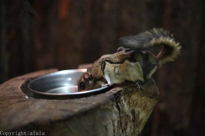 ニホンモモンガ 動物園