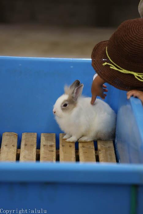ウサギ 画像