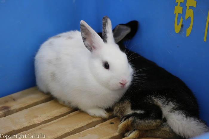 日本平動物園 ふれあい ウサギ