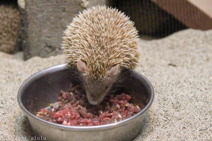 東山動物園 レア 動物