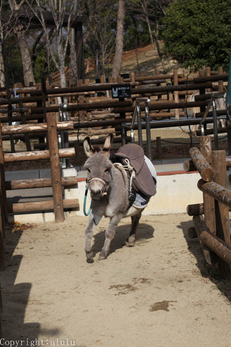 ロバ ドンキー 動物園