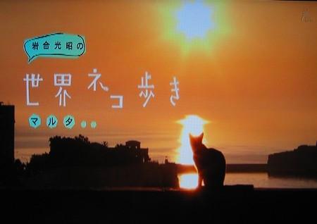 岩合光昭の世界ネコ歩き「マルタ」