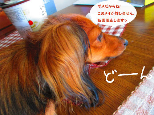 2015-09-omamori3.jpg