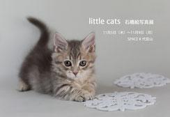 写真展 little cats