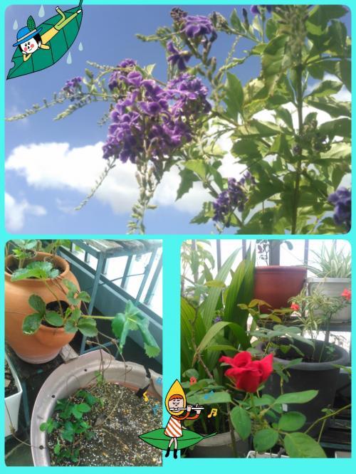 2015-08-24-10-43-48_deco_convert_20150824204759.jpg