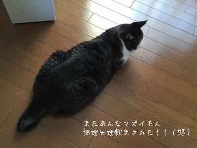 ぷんすか銀①