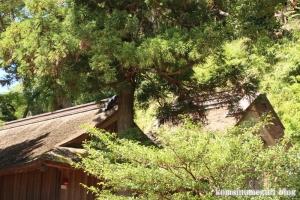 加賀神社(松江市島根町加賀)69