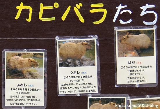 とくしま動物園_29
