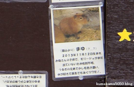 とくしま動物園_31