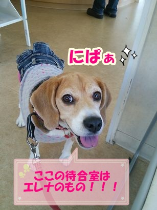 2015_1018_111005-DSC_3011_.jpg
