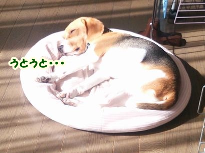 2015_1020_100645-DSC_3092_.jpg