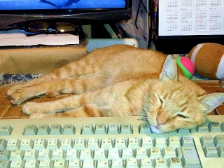 150821_3411キーボードを枕にするトラ美ちゃんVGA