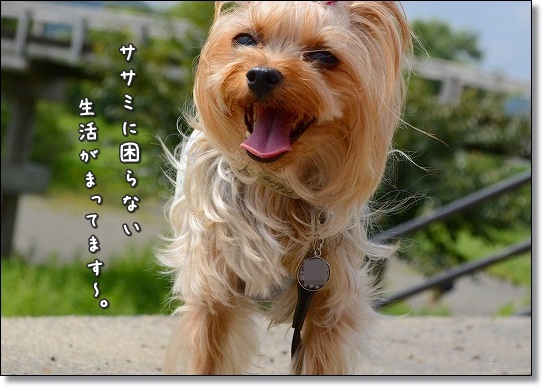 DSC_0009_201509061307590b9.jpg