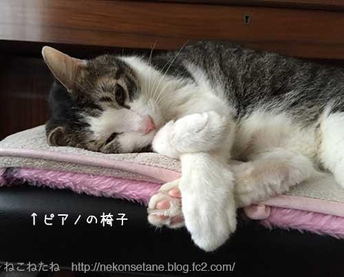 ピアノの椅子で寝るアーク先生1