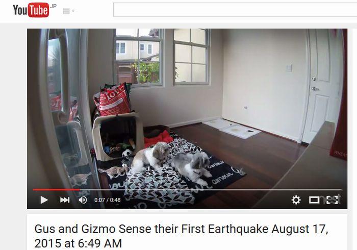 【地震予知】地震が来る前に飛び起きた「2匹の犬」がアメリカで話題に