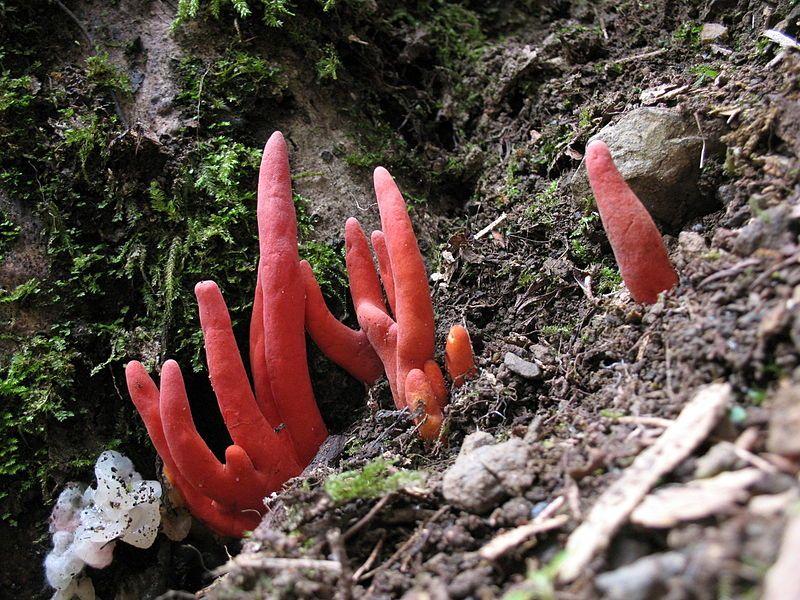 触れるだけでも危険な「カエンダケ」が奈良で謎の大量発生…注意呼びかけ