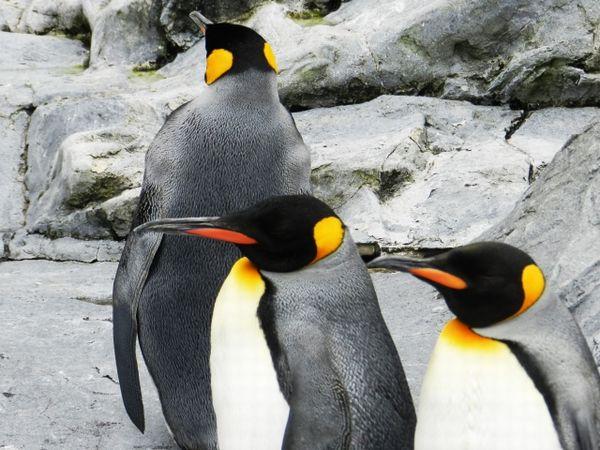 南極海でCO2の吸収量が飽和状態になりつつあるとの報告…今後、広範囲に熱波や豪雨、干ばつが発生しやすくなる可能性