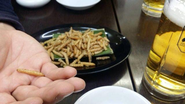【昆虫食】EUが「イエバエ、コオロギ、カイコ」など食用の可能性を検討…安全で栄養価が高い