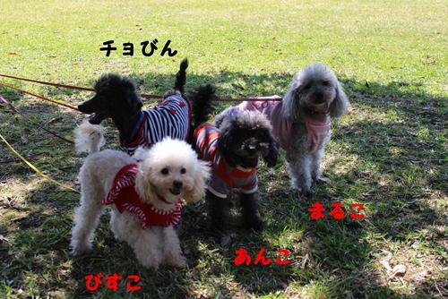 IMG_0033_R.jpg