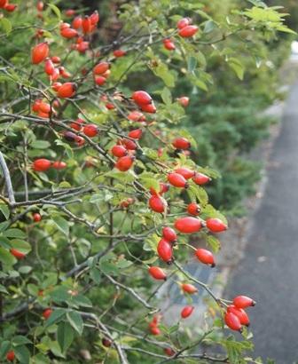 my-garden 010 (3)