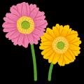 flower_gerbera.png