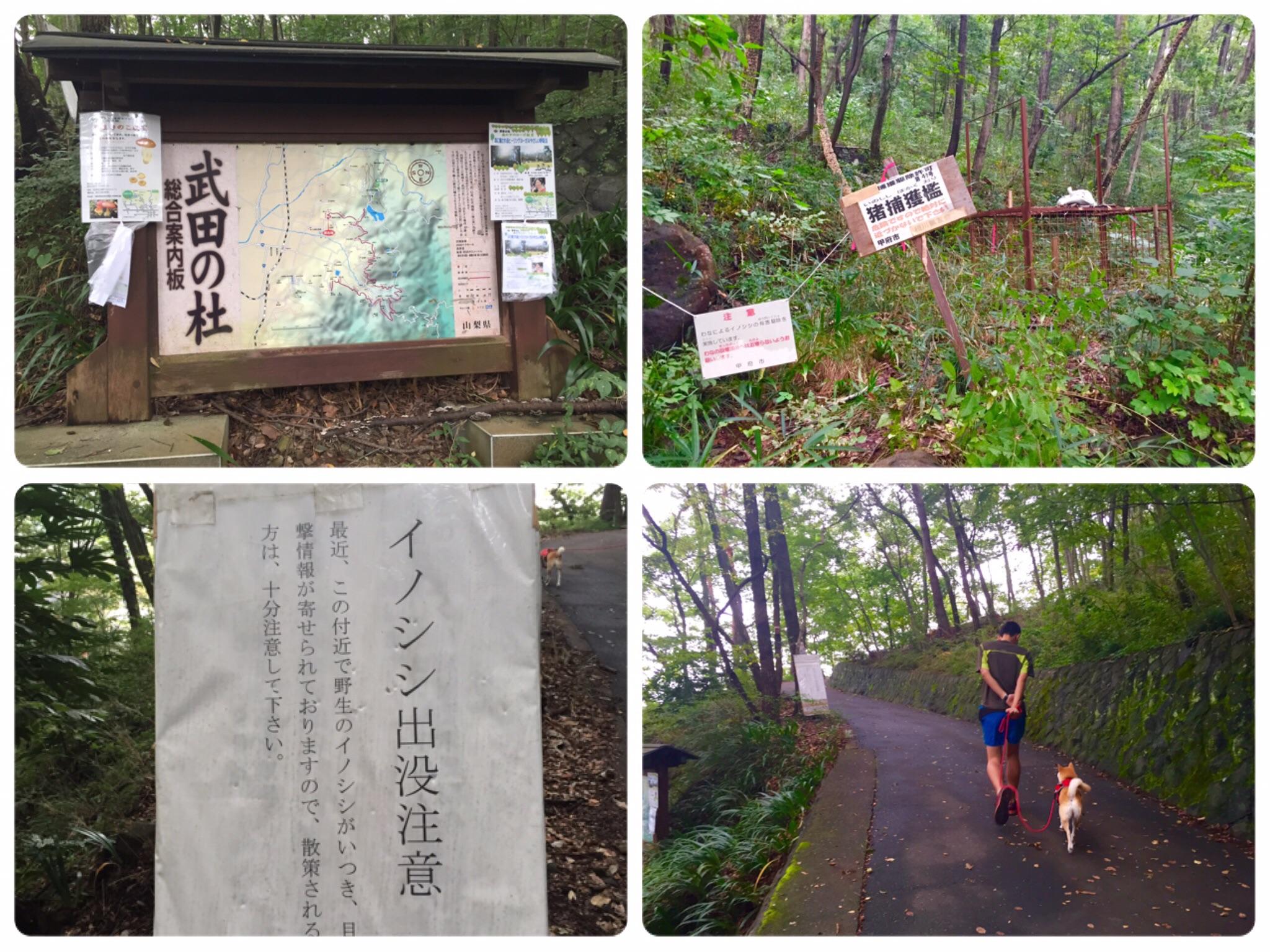 心のトレーニング!(里山散歩)