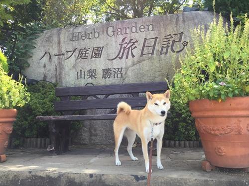 ハーブ庭園旅日記(コスモス)
