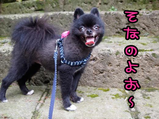 kaidanoborigatokuidesu.jpg
