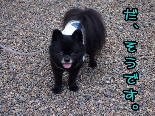 katorifutatabi03.jpg