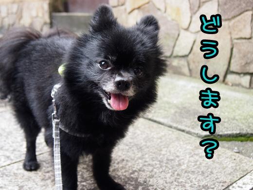 kawaiikumadedousimasu.jpg
