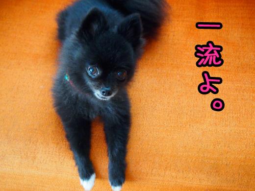 uchihaichiryuunoomisedakara.jpg