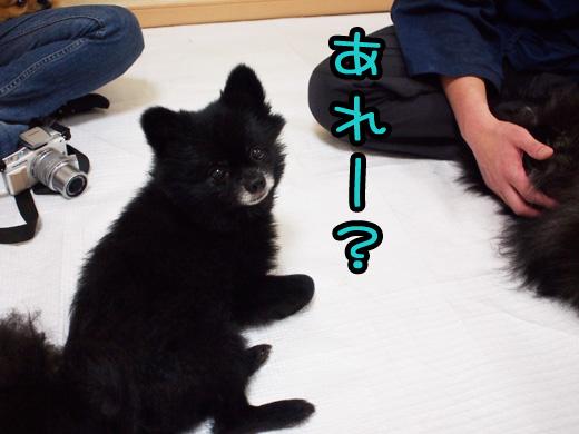 yuzurimosezumaehederu.jpg