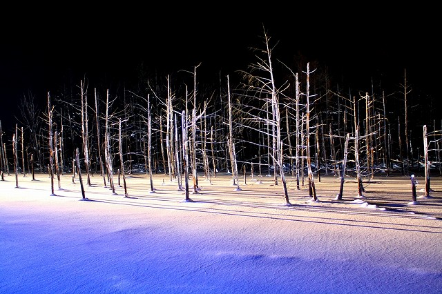 s-2014青い池ライトアップa
