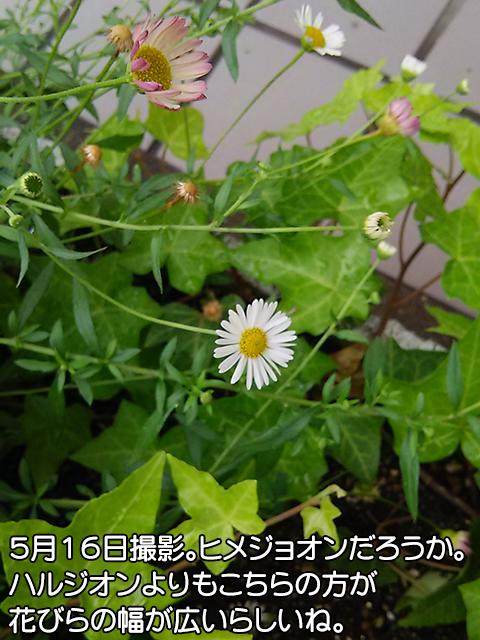 DSC_0054_1.jpg