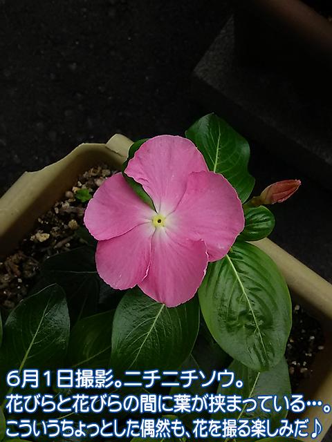 DSC_0266_1.jpg