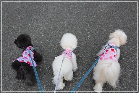 3姉妹で今日もお散歩~