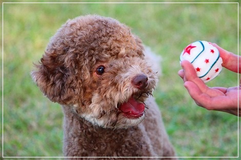 ボール大好き、ぐりちゃん★