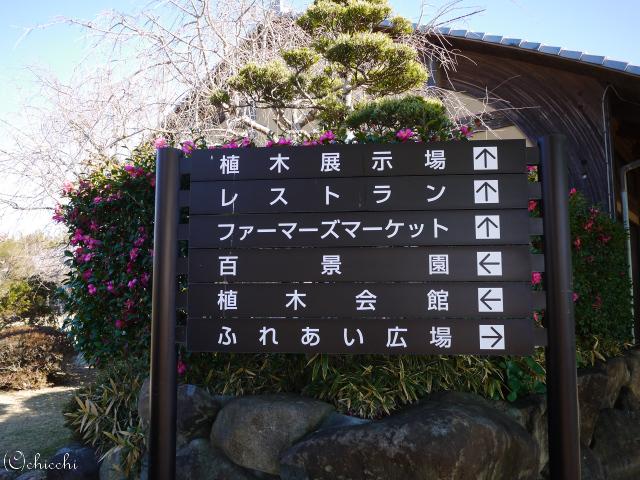 JAとぴあ浜松緑花木センターへ立ち寄る。