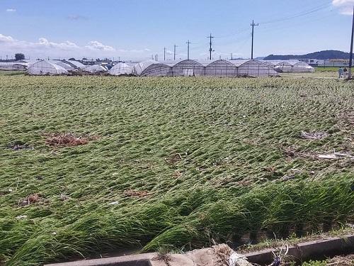 台風18号 災害<現地調査>!鹿沼市奈佐原町地内 黒川⑩