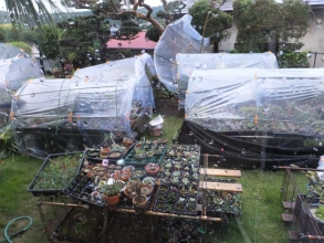 爆弾低気圧の強風で無残に飛んでしまった簡易ビニールハウス2015.10.02