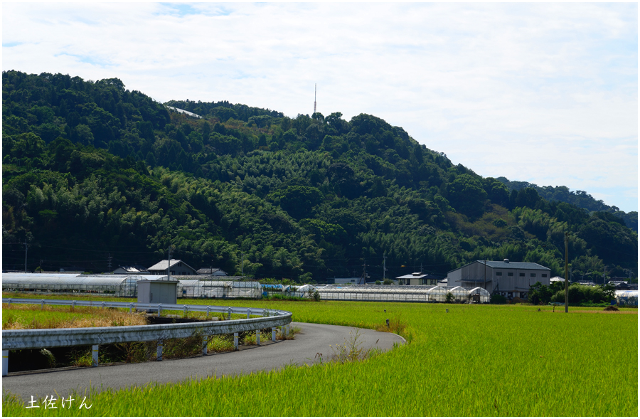 高知・田園風景2