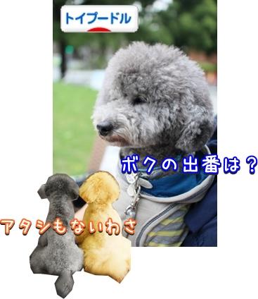 016bnIMG_0953.jpg